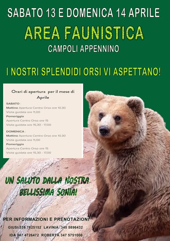 Incontro con gli orsi a Campoli Appennino