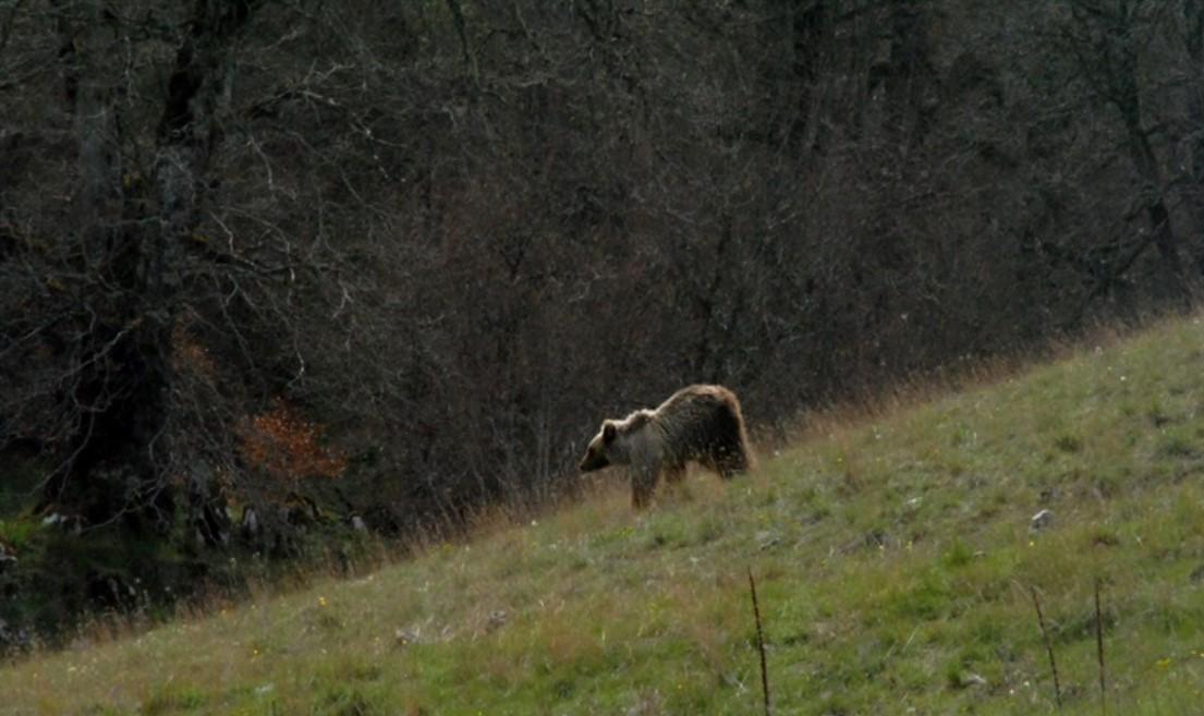 Escursione sui sentieri dell'orso
