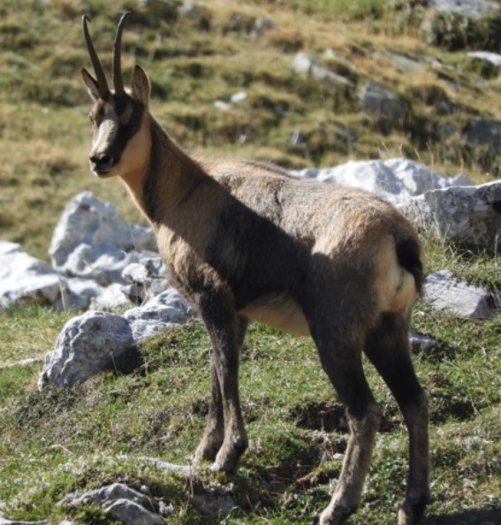 Escursione alla scoperta del camoscio nel Parco Nazionale d'Abruzzo Lazio e Molise