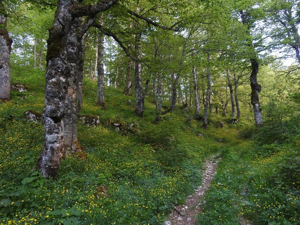 Escursione, nel Parco Nazionale d'Abruzzo, in Cicerana e nella faggetta secolare