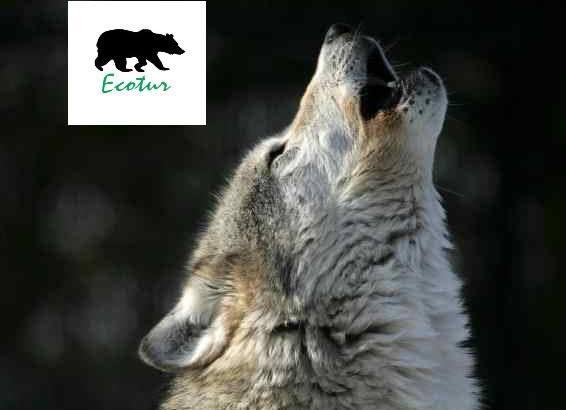 Escursione nel Parco Nazionale D'Abruzzo sulle tracce del lupo