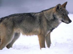 Passeggiata serale nel Parco Nazionale d'Abruzzo sulle tracce del lupo