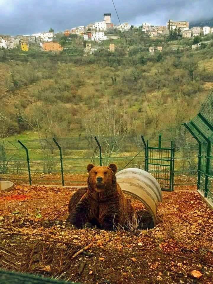 Area Faunistica dell'orso di Campoli Appennino